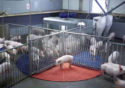 Swine Innovation Centre (VIC), Sterksel, August 2012