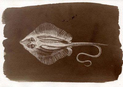 Salt print (made with North Sea water) of extinct fish (stingray)