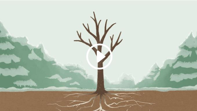 The MIAP Story Tree
